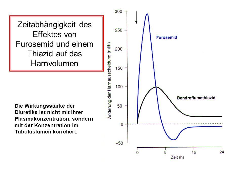 Zeitabhängigkeit des Effektes von Furosemid und einem Thiazid auf das Harnvolumen Die Wirkungsstärke der Diuretika ist nicht mit ihrer Plasmakonzentra