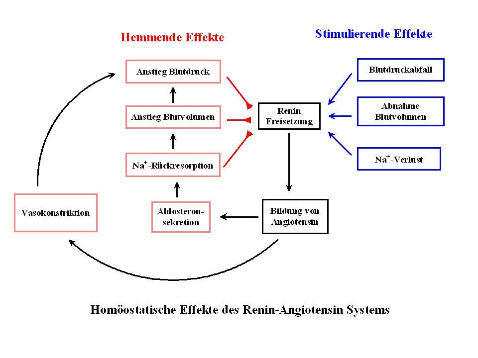 Diuretika-Resistenz Resistenz gegen Diuretika kann beruhen auf : Mangelnder Compliance Ungenügender Resorption (dekompensierte Herzinsuffizienz) Mangelhafter renaler Ausscheidung (Nierenisuffizienz, kompetitive Hemmung der tubulären Sekretion) Proteinbindung im Tubuluslumen (nephrotisches Syndrom) Gesteigerte renale Na-Rückresorption (Herzinsuffizienz, Leberzirrhose, chronische Behandlung mit Diuretika) Hämodynamisch bedingte Abnahme der GFR (Hypotonie, Antihypertonika, reduziertes zirkulierendes Volumen )
