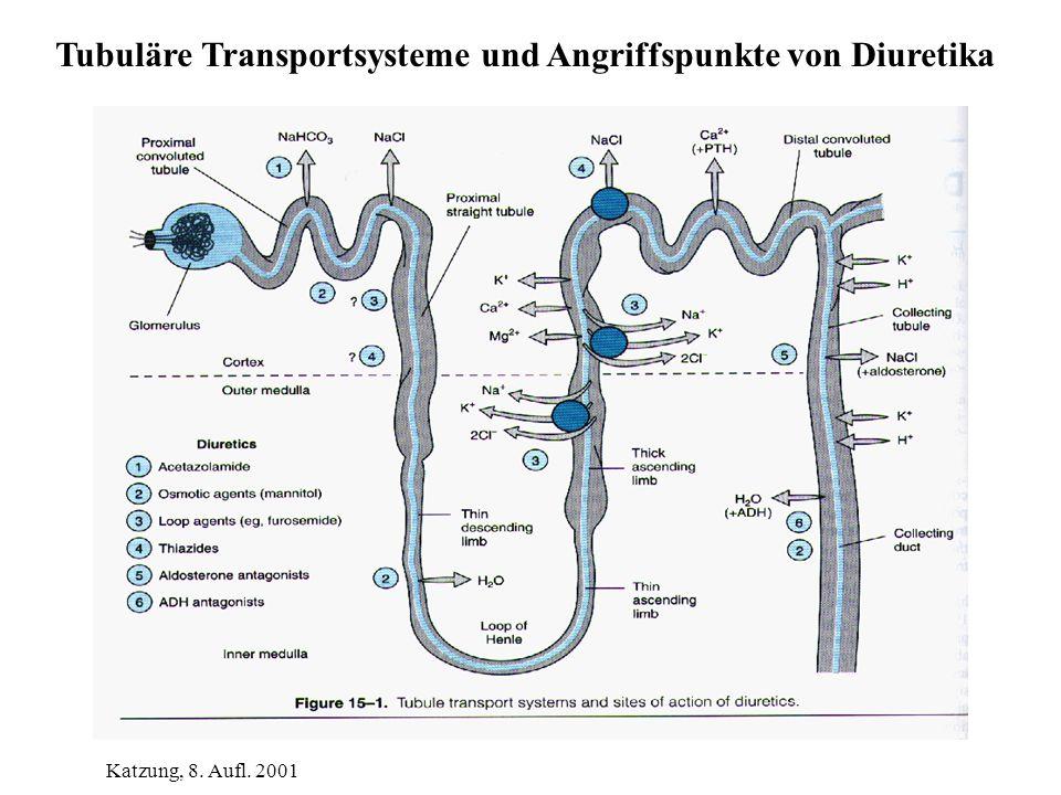 Zeitabhängigkeit des Effektes von Furosemid und einem Thiazid auf das Harnvolumen Die Wirkungsstärke der Diuretika ist nicht mit ihrer Plasmakonzentration, sondern mit der Konzentration im Tubuluslumen korreliert.