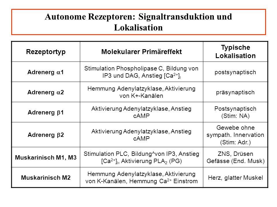 Die Zahlen 2-12 entsprechen Angriffspunkten von Pharmaka im ANS