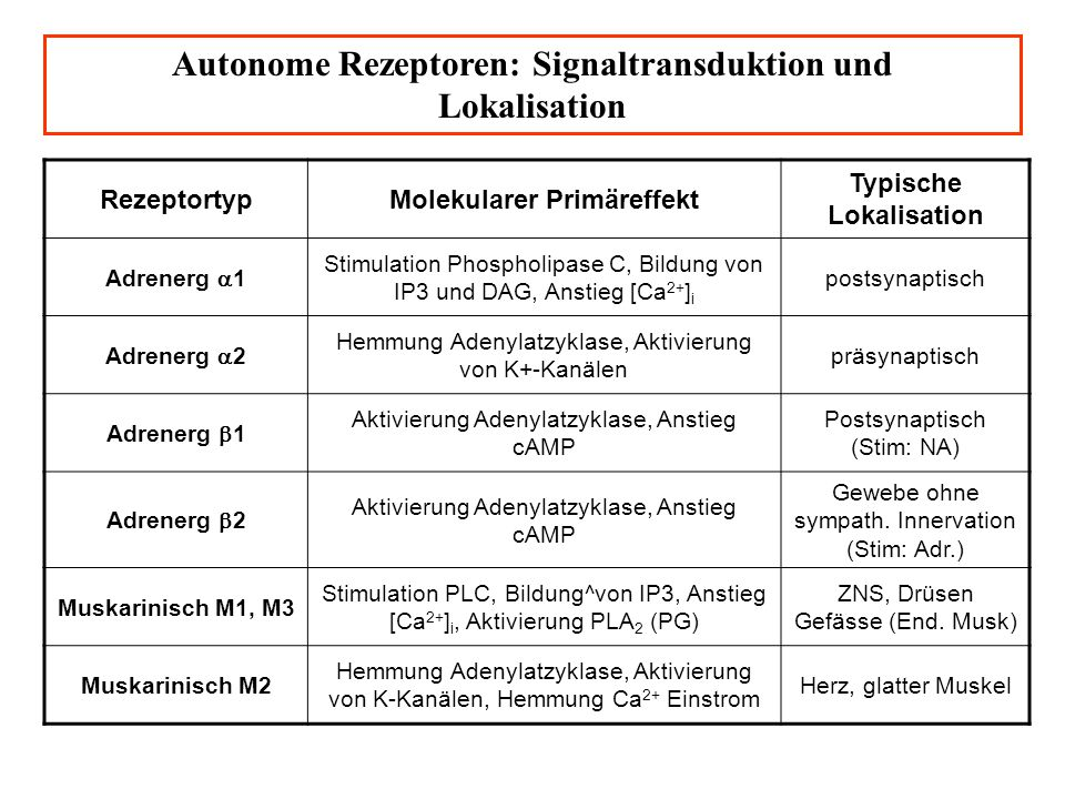 Autonome Rezeptoren: Signaltransduktion und Lokalisation RezeptortypMolekularer Primäreffekt Typische Lokalisation Adrenerg 1 Stimulation Phospholipas