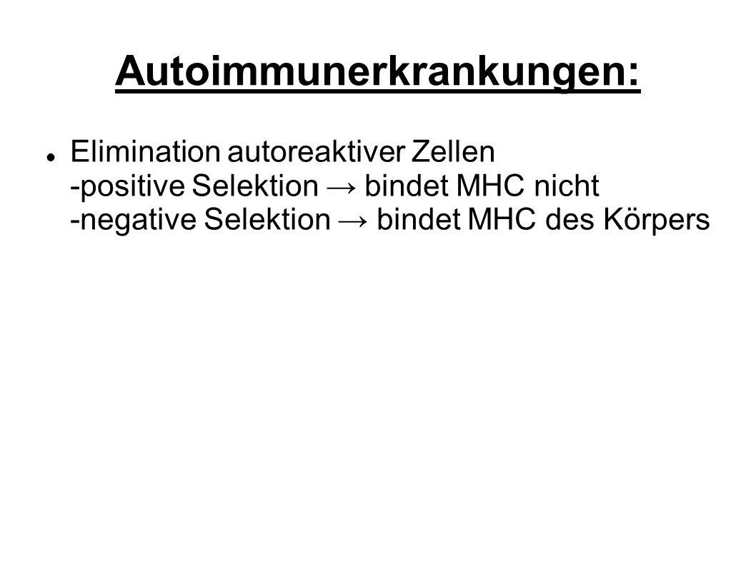 Autoimmunerkrankungen: Elimination autoreaktiver Zellen -positive Selektion bindet MHC nicht -negative Selektion bindet MHC des Körpers