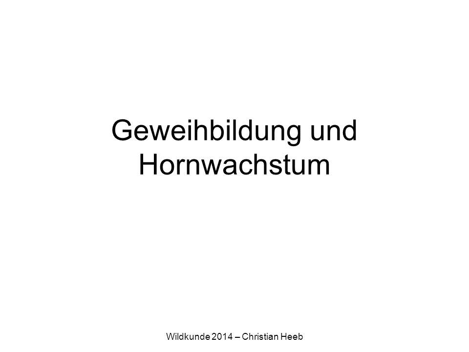 Wildkunde 2014 – Christian Heeb Geweihbildung und Hornwachstum