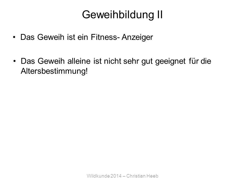 Wildkunde 2014 – Christian Heeb Geweihbildung II Das Geweih ist ein Fitness- Anzeiger Das Geweih alleine ist nicht sehr gut geeignet für die Altersbestimmung!