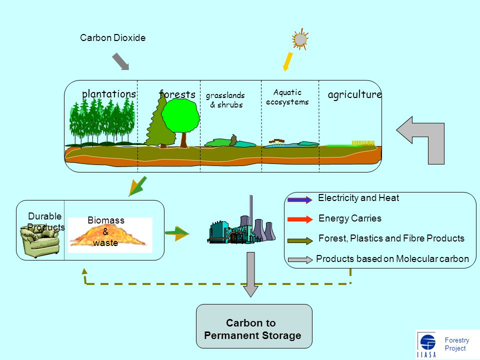 Forestry Project Biomass & waste Carbon Dioxide Carbon to Permanent Storage forests grasslands & shrubs Aquatic ecosystems agriculture plantations Energy Carries Forest, Plastics and Fibre Products Electricity and Heat Products based on Molecular carbon Durable Products