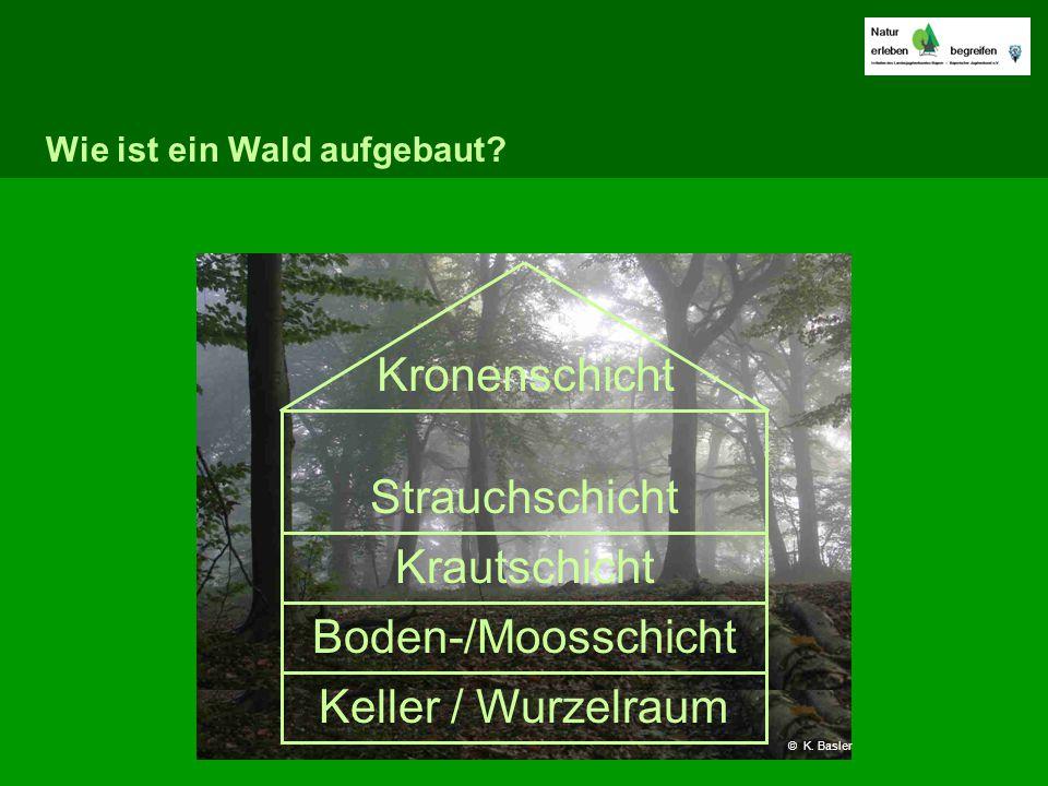 Wie ist ein Wald aufgebaut? Keller / Wurzelraum Boden-/Moosschicht Krautschicht Strauchschicht Kronenschicht © K. Basler