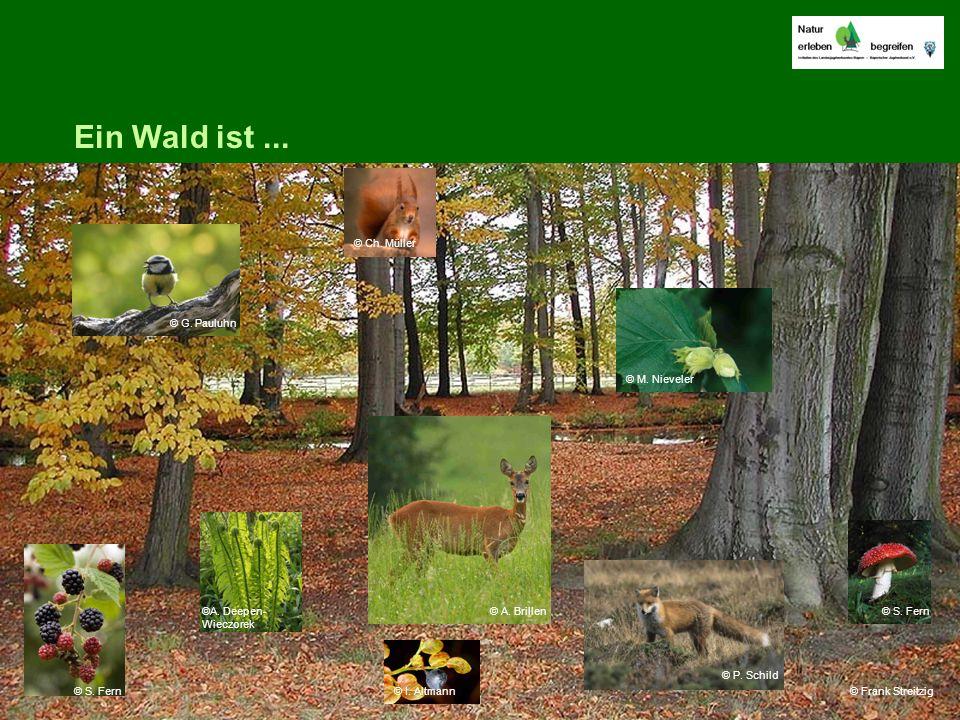 Ein Wald ist... © Frank Streitzig © G. Pauluhn © S. Fern ©A. Deepen- Wieczorek © A. Brillen © I. Altmann © P. Schild © S. Fern © M. Nieveler © Ch. Mül