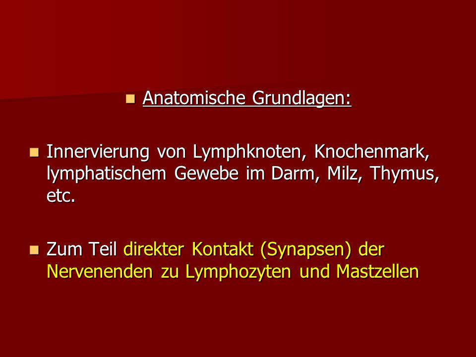 Anatomische Grundlagen: Anatomische Grundlagen: Innervierung von Lymphknoten, Knochenmark, lymphatischem Gewebe im Darm, Milz, Thymus, etc. Innervieru