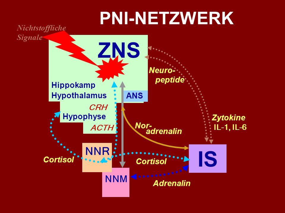 Das Immunsystem ist nicht autonom... AUSGANG BETEILIGTE SYSTEME und HORMONE ZIEL ZNS ANS - Noradrenalin IS ZNS ANS – NNM - Adrenalin IS ZNS Hippokampu