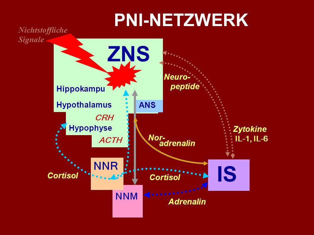 Das Immunsystem ist nicht autonom AUSGANG BETEILIGTE SYSTEME und HORMONE ZIEL ZNS ANS - Noradrenalin IS ZNS ANS – NNM - Adrenalin IS ZNS Hippokampus –