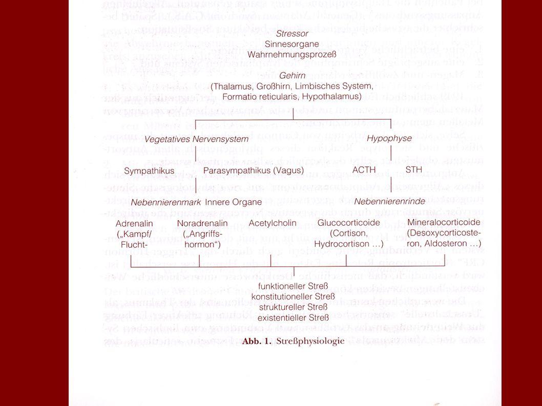 NNM Hippokampus ZNS PNI-NETZWERK IS Hypothalamus Hypophyse NNR Zytokine IL-1, IL-6 Neuro- peptide Adrenalin Nor- adrenalin ANS Cortisol ACTH CRH Corti