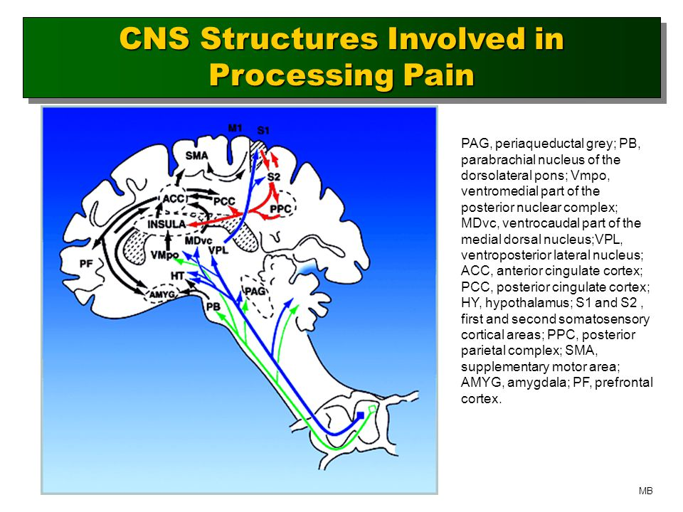 CNS Structures Involved in Processing Pain PAG, periaqueductal grey; PB, parabrachial nucleus of the dorsolateral pons; Vmpo, ventromedial part of the