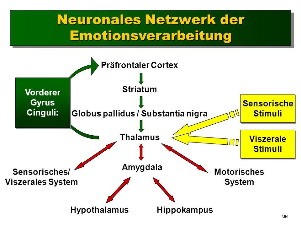 Neuronales Netzwerk der Emotionsverarbeitung Präfrontaler Cortex Striatum Globus pallidus / Substantia nigra Thalamus Sensorisches/ Viszerales System Amygdala Hippokampus Motorisches System Hypothalamus Sensorische Stimuli Sensorische Stimuli Viszerale Stimuli Viszerale Stimuli Vorderer Gyrus Cinguli: Vorderer Gyrus Cinguli: MB
