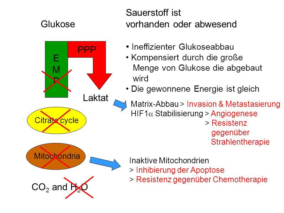 Mitochondria Glukose Citrate cycle EMPEMP Sauerstoff ist vorhanden oder abwesend Ineffizienter Glukoseabbau Kompensiert durch die große Menge von Gluk