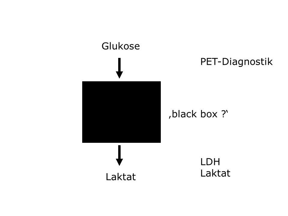 Glioblastoma (+++ positive, Bild A-C, 250x ) und korrespondierdes Normalgewebe von Patient A (D, 400x)
