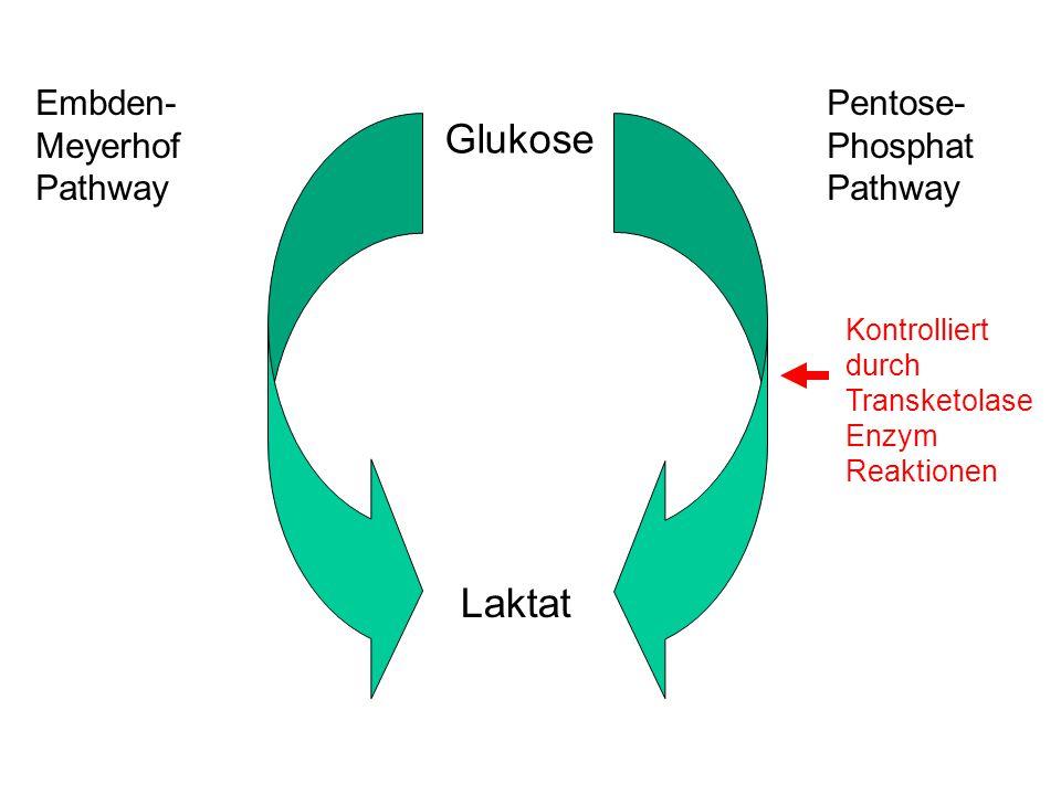 Glukose Laktat Embden- Meyerhof Pathway Pentose- Phosphat Pathway Kontrolliert durch Transketolase Enzym Reaktionen