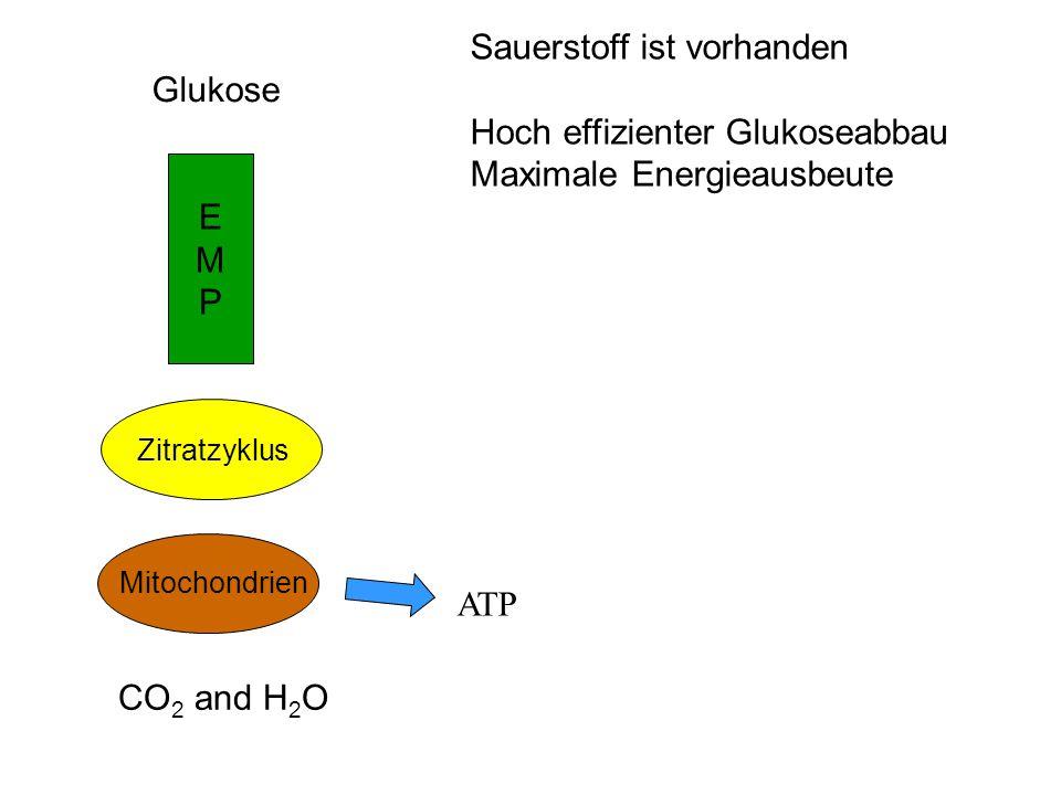 acetyl CoA Glucose Dihydroxy- acetone-P Glycerin- aldehyde-3-P Ribulose–5-P C 5 (Xylulose-5-P) C 5 (Ribose-5-P) C 5 C 7C 3 C 4 C 3 (GAP) C 5 (Xylulose