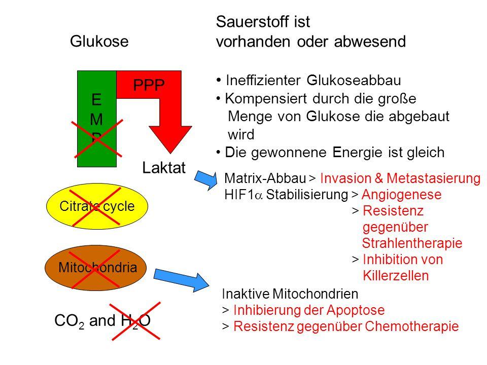 Mitochondrien Glukose Zitratzyklus EMPEMP Sauerstoff ist vorhanden Hoch effizienter Glukoseabbau Maximale Energieausbeute CO 2 and H 2 O ATP