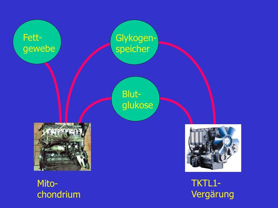 Die TKTL1-Ernährungstherapie: Mischungen aus Pflanzenölen und Pflanzenölextrakten, die den TKTL1-Stoffwechselweg inhibieren glukose-/kohlenhydratarme