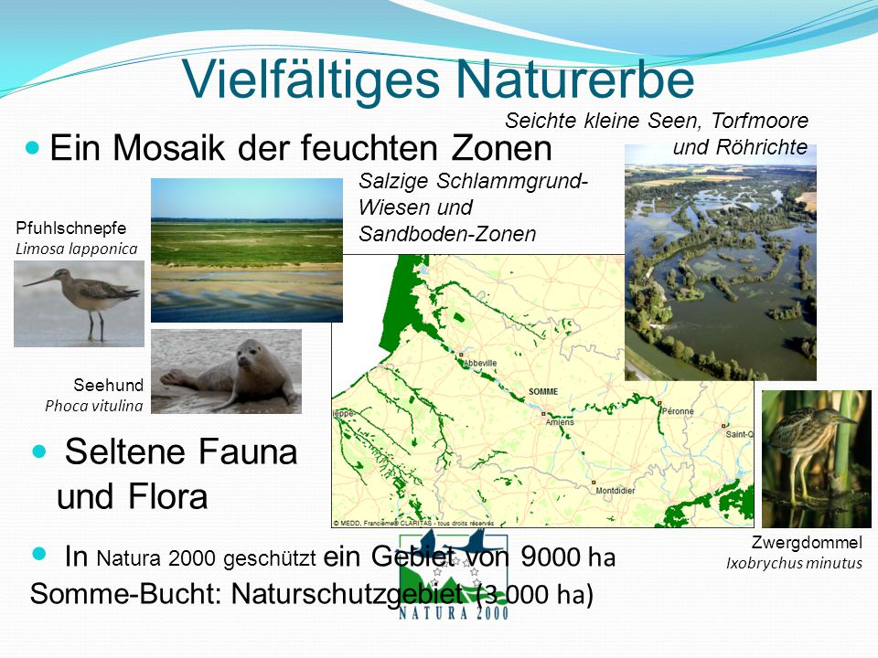 In Natura 2000 geschützt ein Gebiet von 9 000 ha Somme-Bucht: Naturschutzgebiet (3 000 ha) Vielfältiges Naturerbe Ein Mosaik der feuchten Zonen Seicht