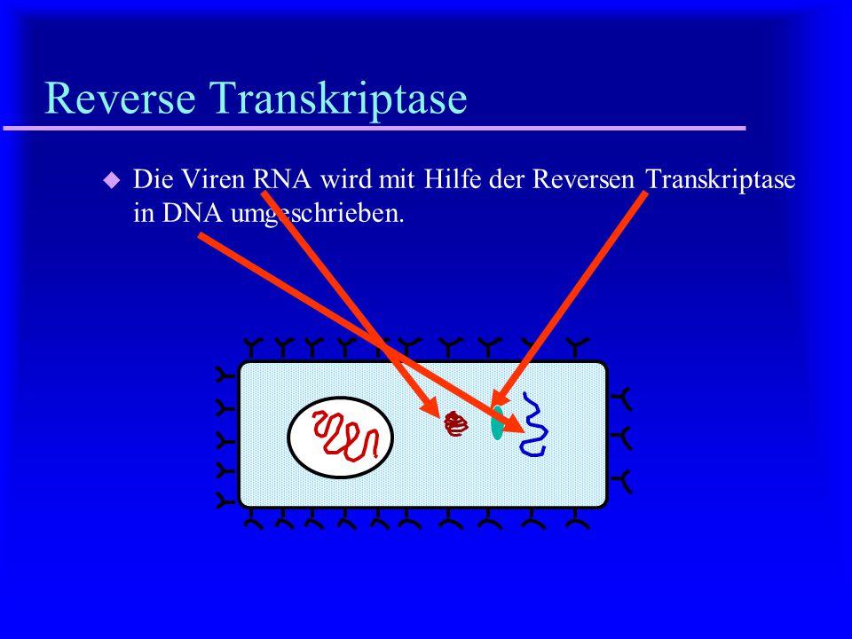 Injektion u Injektion der Viren-RNA in die Zelle.
