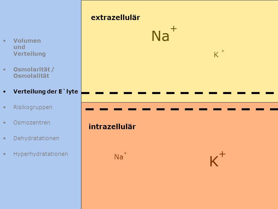 Volumen und Verteilung Osmolarität / Osmolalität Verteilung der E`lyte Risikogruppen Osmozentren Dehydratationen Hyperhydratationen Na + K+K+ K + extr