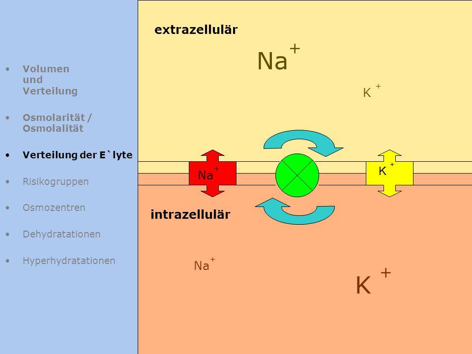 Volumen und Verteilung Osmolarität / Osmolalität Verteilung der E`lyte Risikogruppen Osmozentren Dehydratationen Hyperhydratationen Na + K + extrazell
