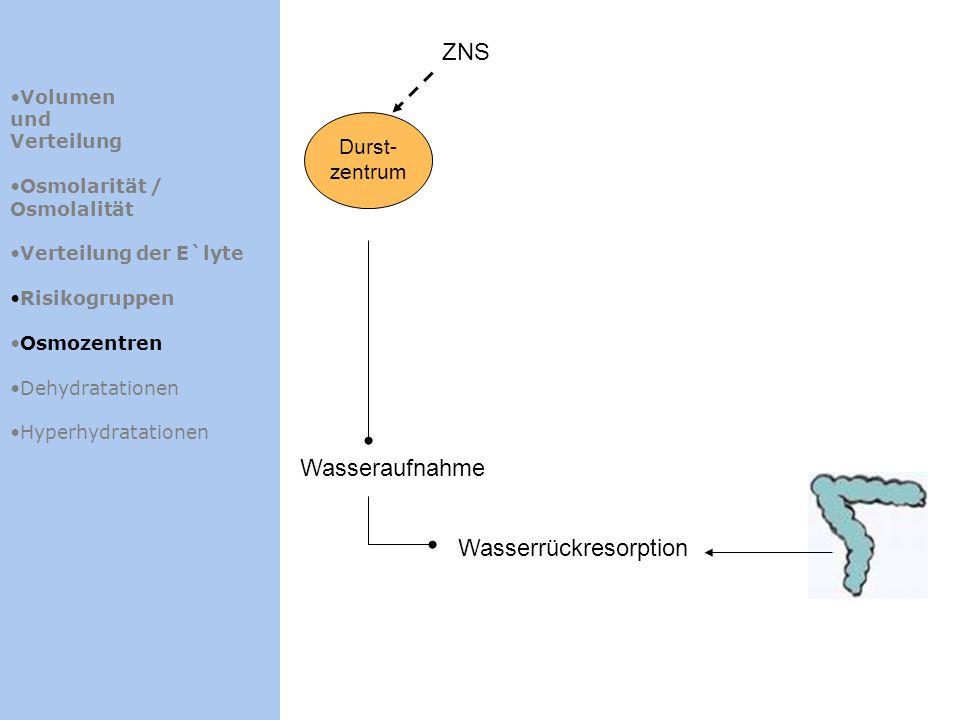 Volumen und Verteilung Osmolarität / Osmolalität Verteilung der E`lyte Risikogruppen Osmozentren Dehydratationen Hyperhydratationen ZNS Durst- zentrum