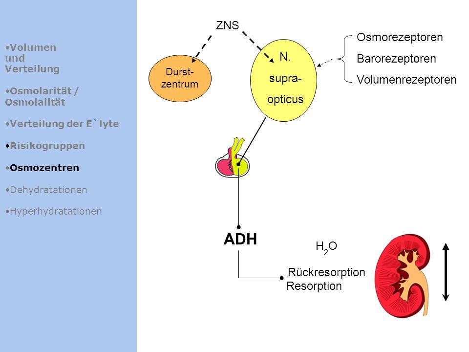 Volumen und Verteilung Osmolarität / Osmolalität Verteilung der E`lyte Risikogruppen Osmozentren Dehydratationen Hyperhydratationen N. supra- opticus