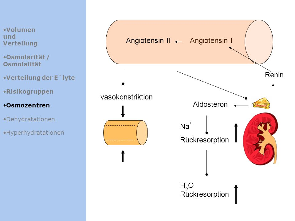 Volumen und Verteilung Osmolarität / Osmolalität Verteilung der E`lyte Risikogruppen Osmozentren Dehydratationen Hyperhydratationen Renin Angiotensin