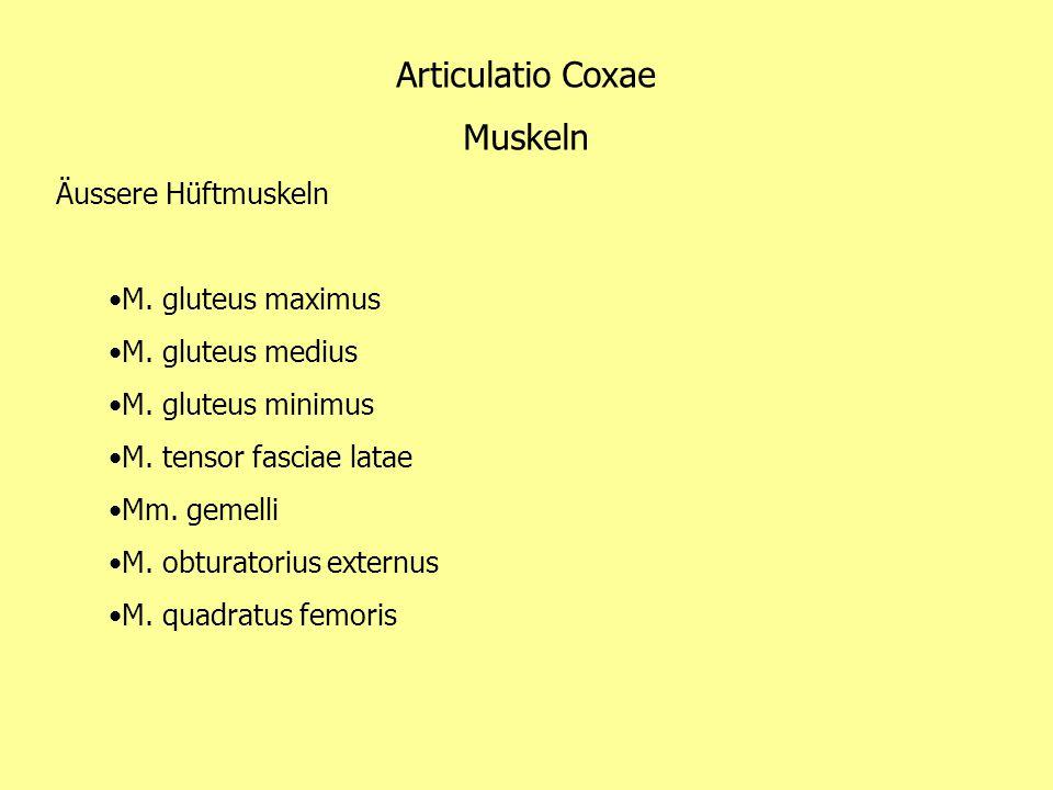 Articulatio Coxae Muskeln Äussere Hüftmuskeln M. gluteus maximus M. gluteus medius M. gluteus minimus M. tensor fasciae latae Mm. gemelli M. obturator