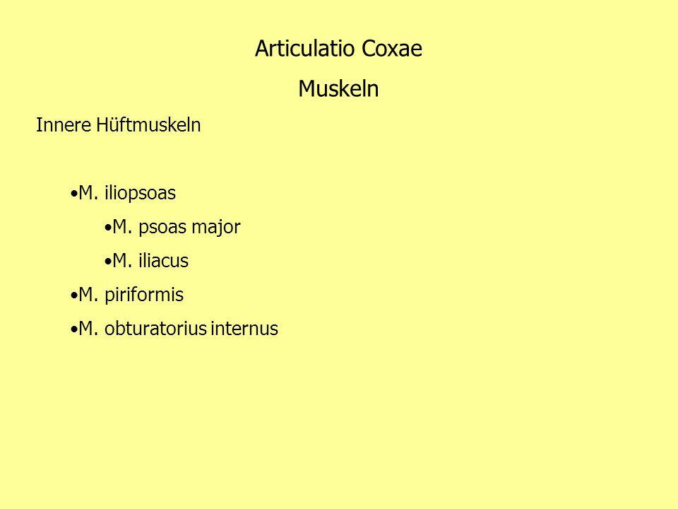 Articulatio Coxae Muskeln Innere Hüftmuskeln M. iliopsoas M. psoas major M. iliacus M. piriformis M. obturatorius internus