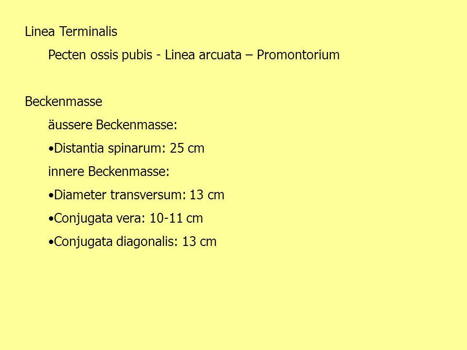 Linea Terminalis Pecten ossis pubis - Linea arcuata – Promontorium Beckenmasse äussere Beckenmasse: Distantia spinarum: 25 cm innere Beckenmasse: Diam