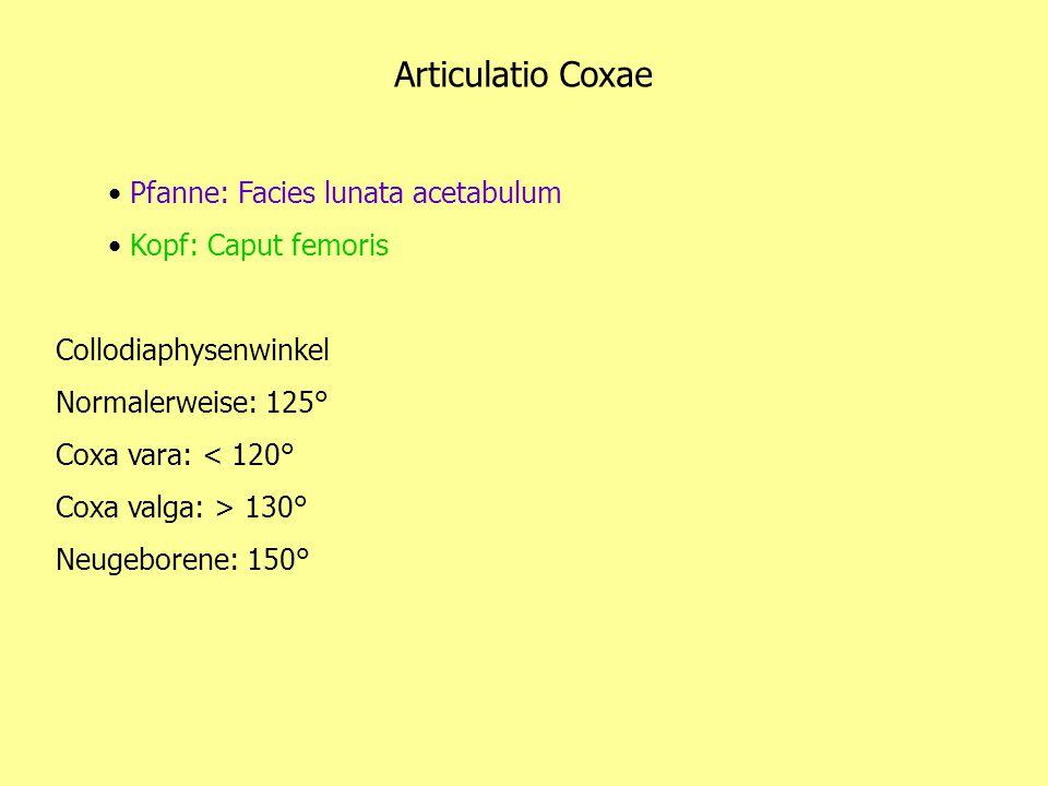 Articulatio Coxae Pfanne: Facies lunata acetabulum Kopf: Caput femoris Collodiaphysenwinkel Normalerweise: 125° Coxa vara: < 120° Coxa valga: > 130° N