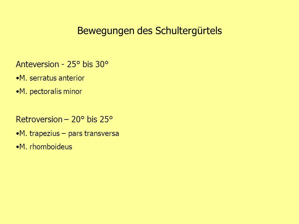 Bewegungen des Schultergürtels Anteversion - 25° bis 30° M.