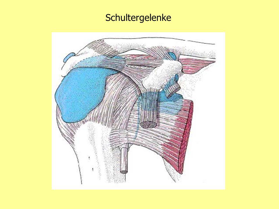 Schultergelenke