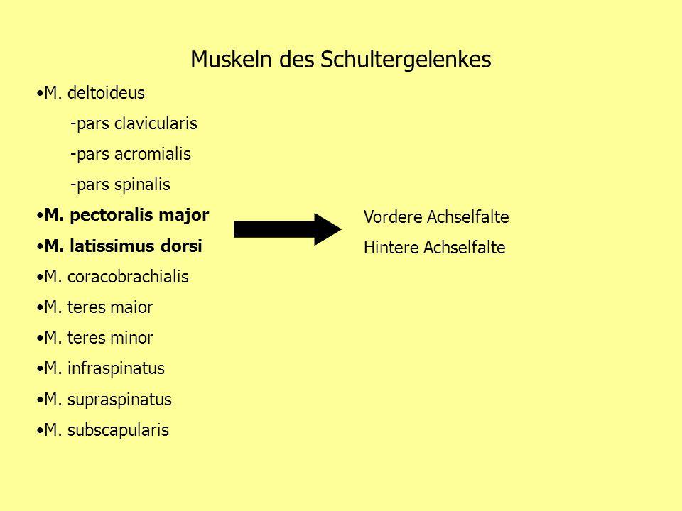 Muskeln des Schultergelenkes M. deltoideus -pars clavicularis -pars acromialis -pars spinalis M. pectoralis major M. latissimus dorsi M. coracobrachia