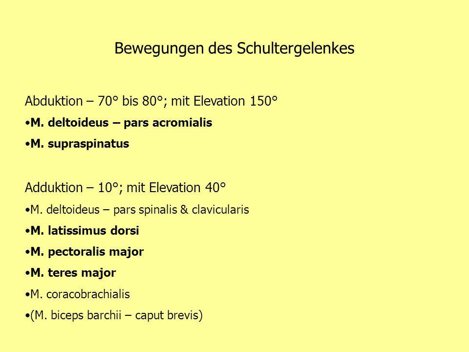 Bewegungen des Schultergelenkes Abduktion – 70° bis 80°; mit Elevation 150° M. deltoideus – pars acromialis M. supraspinatus Adduktion – 10°; mit Elev