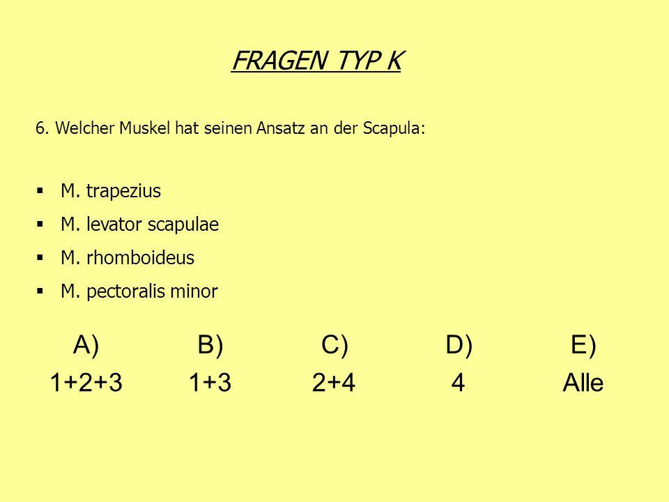 FRAGEN TYP K 6. Welcher Muskel hat seinen Ansatz an der Scapula: M. trapezius M. levator scapulae M. rhomboideus M. pectoralis minor A)B)C)D)E) 1+2+31