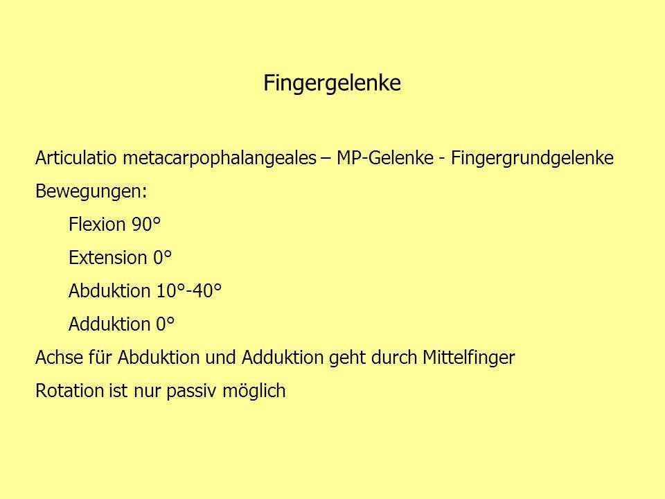 Fingergelenke Articulatio metacarpophalangeales – MP-Gelenke - Fingergrundgelenke Bewegungen: Flexion 90° Extension 0° Abduktion 10°-40° Adduktion 0°