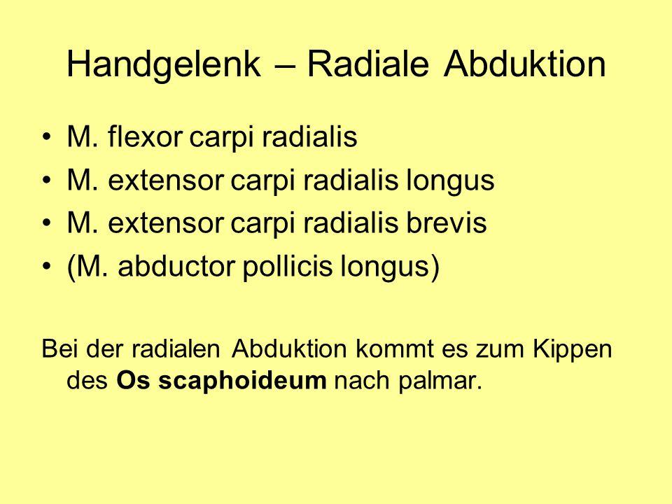 Handgelenk – Radiale Abduktion M. flexor carpi radialis M. extensor carpi radialis longus M. extensor carpi radialis brevis (M. abductor pollicis long