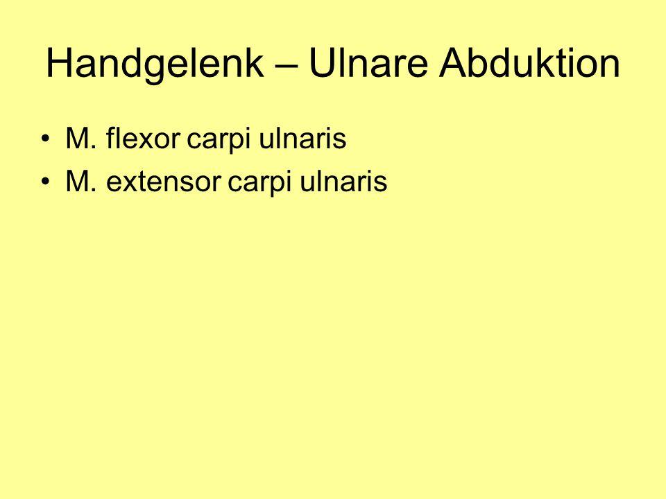 Handgelenk – Ulnare Abduktion M. flexor carpi ulnaris M. extensor carpi ulnaris
