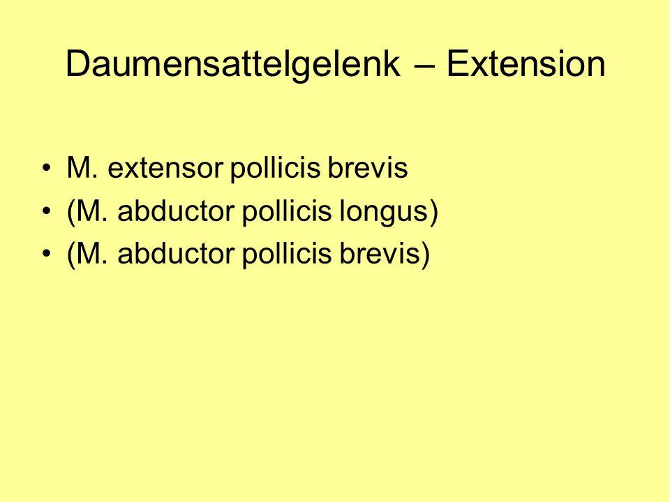 Daumensattelgelenk – Extension M. extensor pollicis brevis (M. abductor pollicis longus) (M. abductor pollicis brevis)