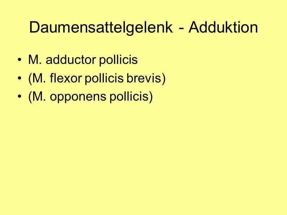 Daumensattelgelenk - Adduktion M. adductor pollicis (M. flexor pollicis brevis) (M. opponens pollicis)