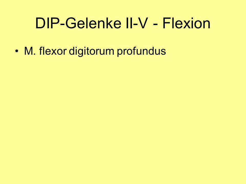 DIP-Gelenke II-V - Flexion M. flexor digitorum profundus