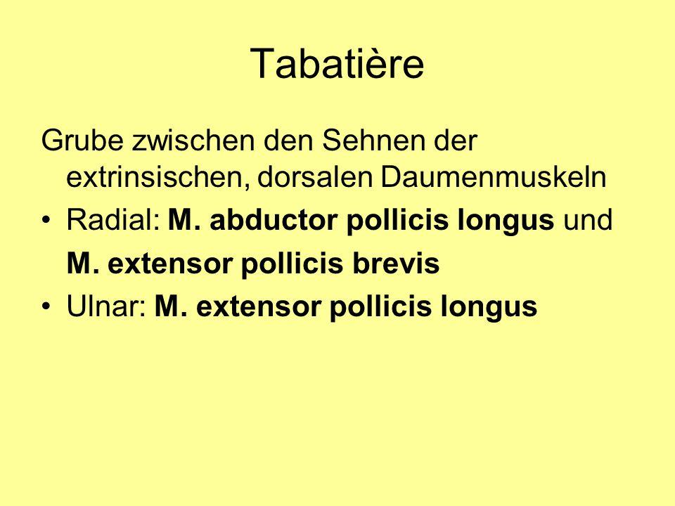 Tabatière Grube zwischen den Sehnen der extrinsischen, dorsalen Daumenmuskeln Radial: M. abductor pollicis longus und M. extensor pollicis brevis Ulna