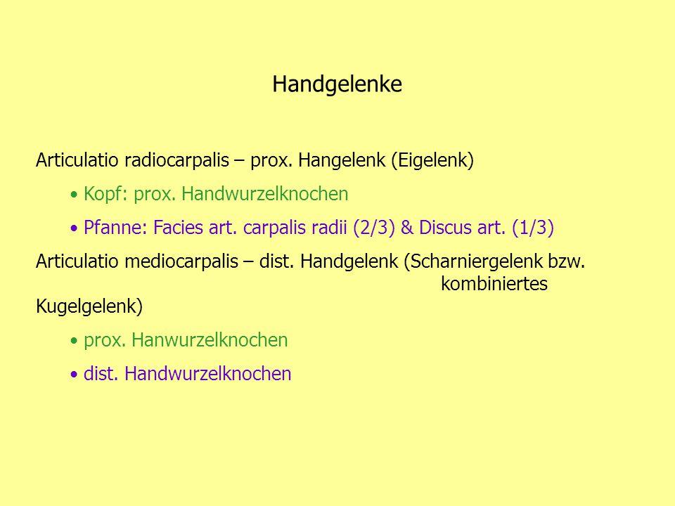 Handgelenke Articulatio radiocarpalis – prox. Hangelenk (Eigelenk) Kopf: prox. Handwurzelknochen Pfanne: Facies art. carpalis radii (2/3) & Discus art