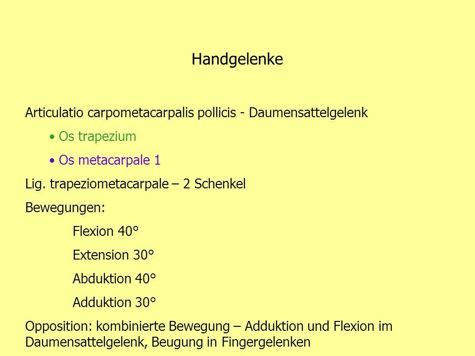 Handgelenke Articulatio carpometacarpalis pollicis - Daumensattelgelenk Os trapezium Os metacarpale 1 Lig. trapeziometacarpale – 2 Schenkel Bewegungen