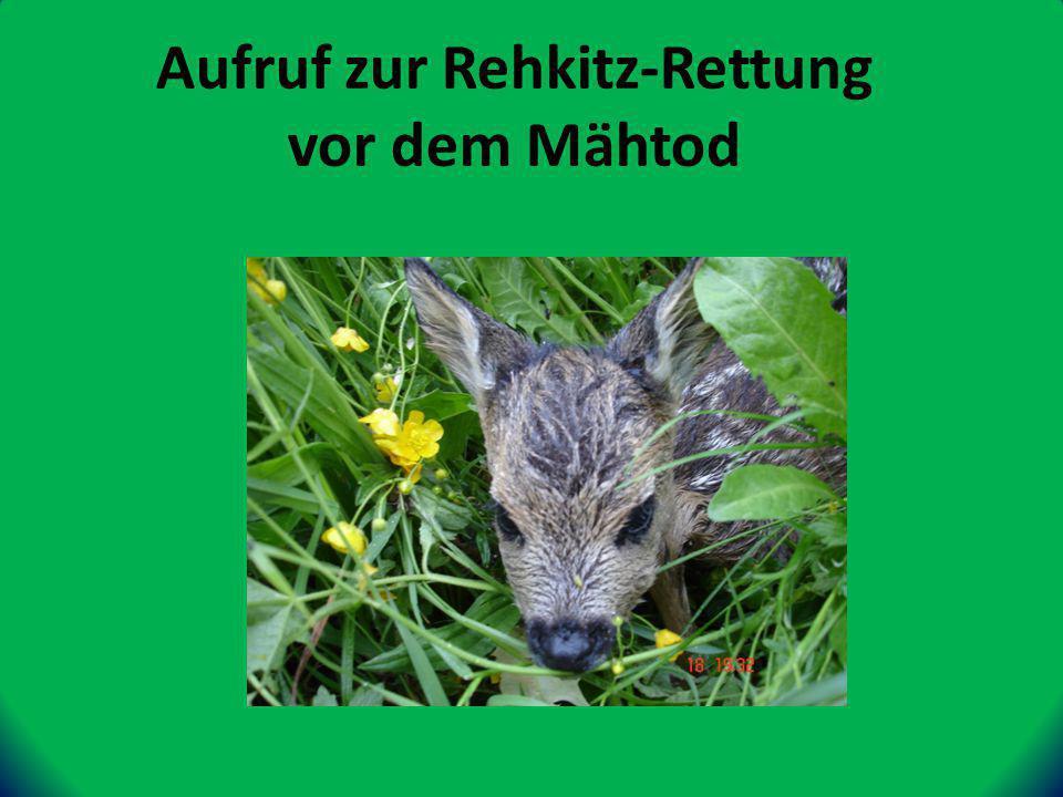 Aufruf zur Rehkitz-Rettung vor dem Mähtod