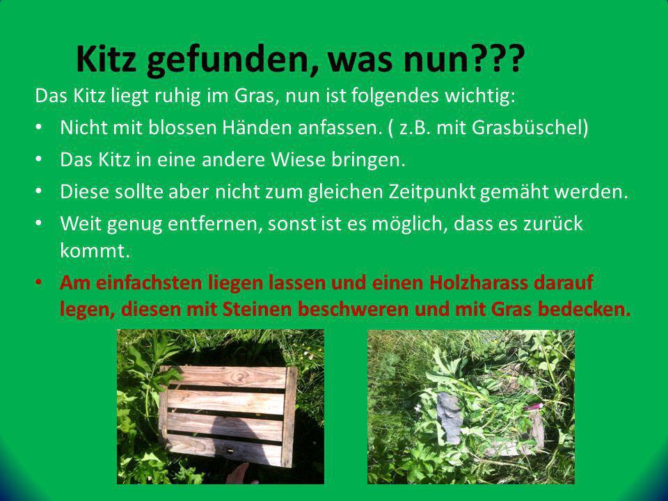 Das Kitz liegt ruhig im Gras, nun ist folgendes wichtig: Nicht mit blossen Händen anfassen.
